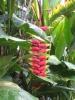 die Papageienblume