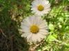 der Welt schönste Blume