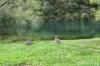 Enten wie daheim an einem stillen, breiten Fluß, der in Richung Huka Falls fließt
