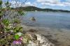 zwei Blumen, wunderschön ;-)  eine im Wasser, die andere an Land