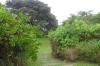 Nochmal der Garten, in dem wir uns austoben dürfen, aber den Rasen mäht der Vermieter!