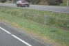 Die einzige Chance für Frühlingsblumen - mitten auf dem State Highway 1. Überall sonst werden sie aufgefressen...