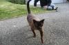 Nachbar´s Katze - Nachbarskatze... sieht irgendwie ägyptisch aus, oder? ;o)