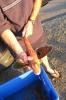 Heute am Strand ein erfolgreicher Fischer