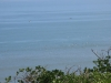 Meins, meins, meins am vormittag! Viele Moewen auf einem Fleck bedeutet viele Fische direkt unter der Wasseroberflaeche...