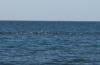 noch mehr Moewen... dazwischen schiessen ab und zu kleine Fische aus dem Wasser.
