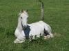 Schoenheit am Wegesrand - allerdings vermutlich das einzige Pferd der Welt, das keine Aepfel mag