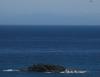 Vom Leuchtturm aus tatsaechlich ein Blick auf die Suedinsel! Die schneebedeckten Kaikoura Ranges, genauer der Manakau mit 2610m