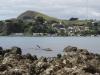 Fetter Blauwal zwischen den Felsen gesichtet