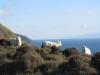 NZ in einem Bild: Nordinsel, Suedinsel, die Faehren dazwischen, lange, weisse, Wolken und natuerlich Schafe...
