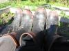 Unsere echten Kiwi Gumboots - ordentlich eingeweicht - aeh, eingeweiht!