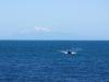 Den 2.885 Meter hohen Tapuae-o-Uenuku auf der Suedinsel (die poetische Übersetzung aus der Maorisprache 'Abdruck des Regenbogens') im HIntergrund und dabei Angeln - ein idealer Kiwi-Sonntag!